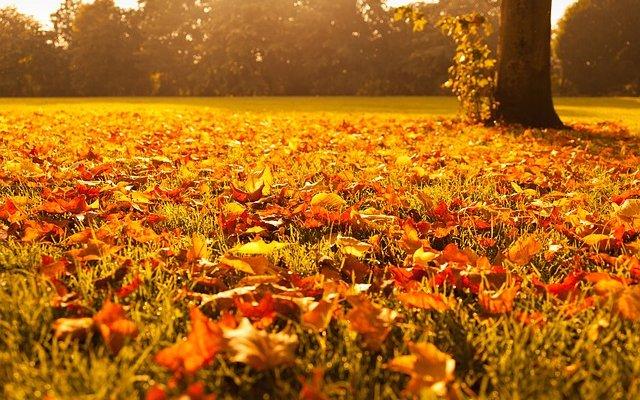 Fall Landscape Checklist