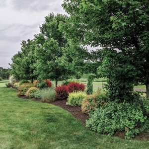 A screening line of native trees, shrubs, perennials, and ornamental grasses blocking the view of the road in Gardiner, NY, designed by Masseo Landscape, Inc. and plants provided by Kalleco Nursery Corp.