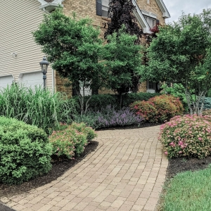 A classic paver walkway with native plantings including spirea, redbud trees, boxwood, and catmint in Gardiner, NY by Masseo Landscape, Inc.