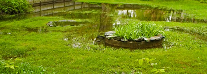 Soggy wet, flooded lawn in need of french drain.