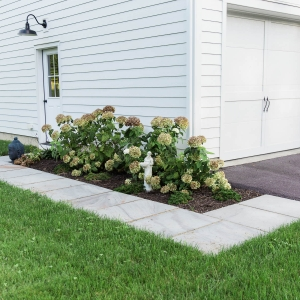 A rectilinear bluestone walkway for a side entry with native hydrangea plantings installed by Masseo Landscape, Inc.
