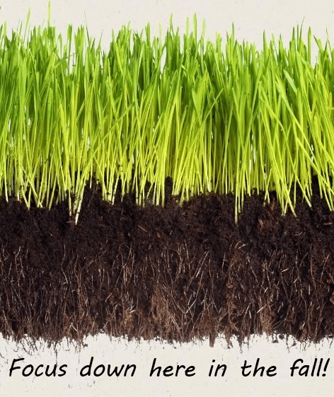 Illustration showing roots of grass.
