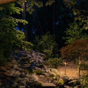 A single standing path light in a landscape with planting specimens.