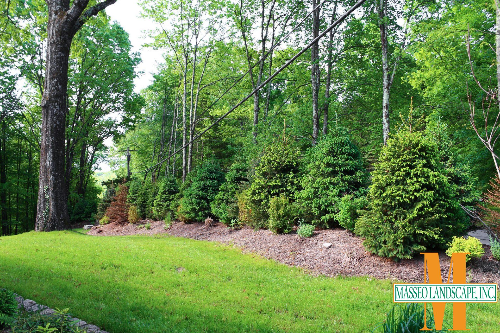 A long privacy planting featuring evergreens and ornamentals blocking the view from the road.