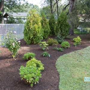 Evergreens and perennials in a mulched bed.