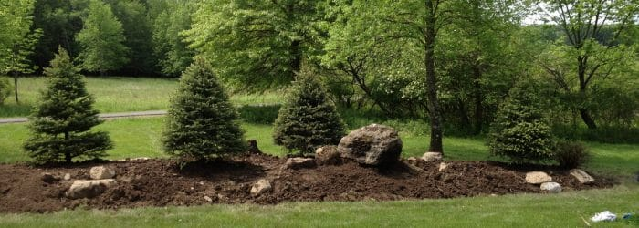 Privacy screening with evergreens - Softscape Landscaping in New Paltz, NY